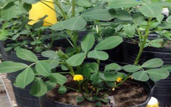 Food mycology and mycotoxicology