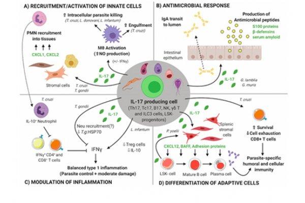 Inmunidad en infecciones y cáncer