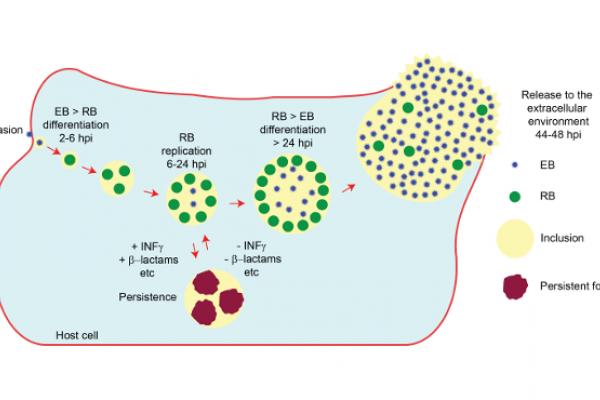 Microbiología celular y molecular de Chlamydia