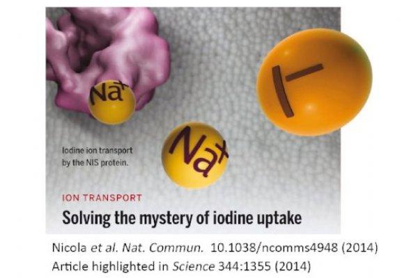 Editorial de la prestigiosa revista Science sobre un artículo científico publicado por el Dr. Nicola durante su postdoctorado en Yale University.